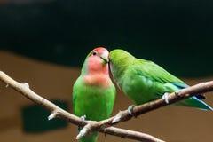 Parc national d'Amazonie de perroquet jaune-naped d'Amazone dans le territoire de la municipalité d'Itaituba dans l'état de Para  Images libres de droits