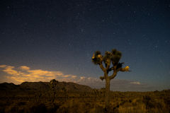 Parc national d'arbre de Joshua Tree Forest In Joshua Image stock