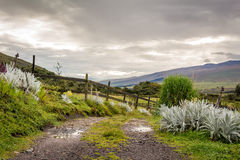 Parc national d'Ecofarm le Cotopaxi Image stock