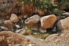 Parc national d'Ein Gedi l'israel Photos libres de droits