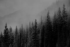 Parc national de Banff de lever de soleil de vallée de montagne photo libre de droits