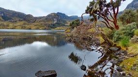 Parc national de Cajas, lac Toreadora, arbres de papier tombés photographie stock libre de droits