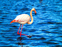 Parc national de Camargue de flamants roses, France Photographie stock