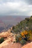 Parc national de canyon grand, Etats-Unis Image libre de droits