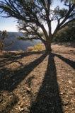 Parc national de canyon grand, Etats-Unis Image stock