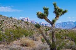 Parc national de canyon rouge de roche, Nevada Images libres de droits