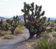 Parc national de canyon rouge de roche, Nevada Photos libres de droits