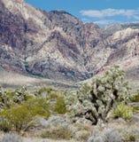 Parc national de canyon rouge de roche, Nevadak Photo libre de droits