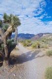 Parc national de canyon rouge de roche, Nevadak Images stock