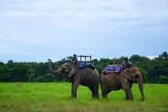 Parc national de Chitwan du Népal Photos libres de droits