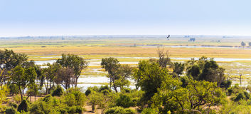 Parc national de Chobe photo libre de droits
