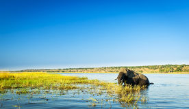 Parc national de Chobe image stock