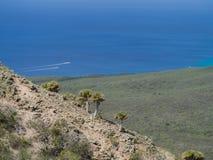 Parc national de Christoffel - arbres de plam Image libre de droits