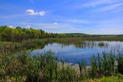 Parc national de Comana - Roumanie Photo libre de droits