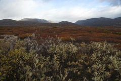 Parc national de Dovre, Norvège Photos libres de droits