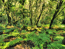 Parc national de Garajonay Photo stock