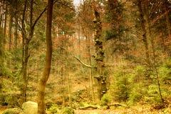 Parc national de Karkonoski, Szklarska Poreba, Pologne Backg de forêt Photos stock