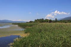 Parc national de Kerkini de lac en Grèce Photos stock