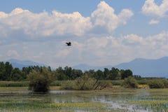 Parc national de Kerkini de lac en Grèce Photographie stock
