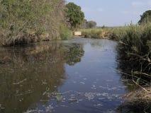 Parc national de Kruger images libres de droits