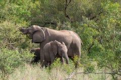Parc national de Kruger, Mpumalanga, Afrique du Sud photos stock