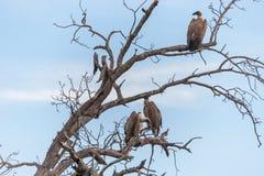 Parc national de Kruger, Mpumalanga, Afrique du Sud images libres de droits