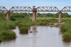 Parc national de Kruger, Mpumalanga, Afrique du Sud image libre de droits