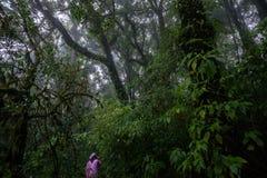 Parc national de la Thaïlande Doi Intanon de nord de ChiangMai avec la diversité biologique et stupéfiante pour le tourisme photographie stock