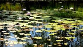 Parc national de Limmen, territoire du nord, Australie Photos stock