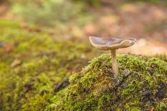 Parc national de Magura (parc Narodowy de Magurski) Photos libres de droits