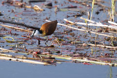 Parc national de Mamili images libres de droits