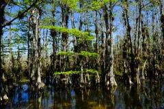 Parc national de marais photos stock
