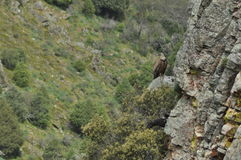 Parc national de Monfragae, roche avec une colonie des vautours Photographie stock libre de droits