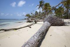 Parc national de Morrocoy, un paradis avec des arbres de noix de coco, San blanc images libres de droits