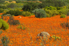 Paysages africains du sud Images stock