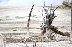 Parc national de Paintpots Yellowstone d'artistes, Wyoming images stock