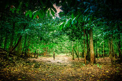 Parc national de Pangandaran Photo stock