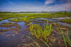 Parc national de Pelee de point, Ontario, Canada Photo stock