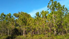 Parc national de Phukradueng images libres de droits