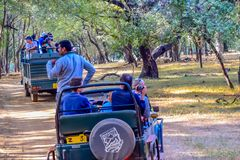 Parc national de RANTHAMBORE, INDE 15 avril : Groupe de touristes sur la zone dangereuse de croisement de jeep de safari de la fo images stock