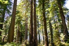 Parc national de séquoia photo libre de droits
