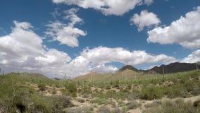 Parc national de Saguaro banque de vidéos