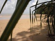 Parc national de Similajau Photo libre de droits