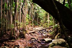Parc national de Tamborine de bâti Images libres de droits
