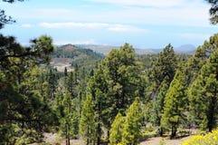 Parc national de teide d'EL (Ténérife) Photographie stock libre de droits