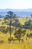 Parc national de Thung Salaeng Luang Champ et pin de la savane Province de Phetchabun et de Phitsanulok Du nord de la Thaïlande t photo libre de droits