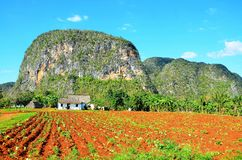 Parc national de Vinales, Cuba photo libre de droits