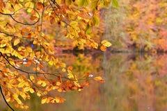 Parc national de Yedigoller Photos libres de droits
