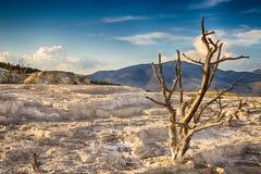 Parc national de Yellowstone Photo libre de droits