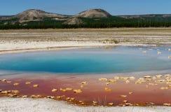 Parc national de Yellowstone Photographie stock libre de droits
